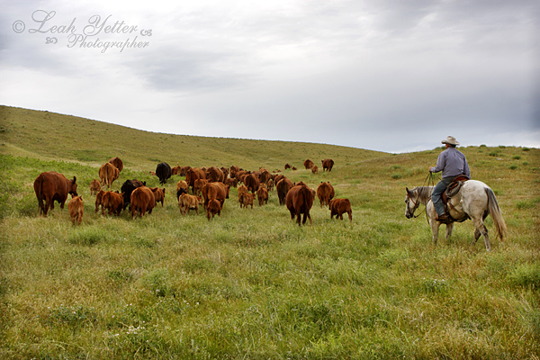 Image result for real working cowgirls