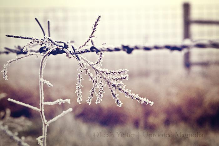 ©Leah Yetter Photographer