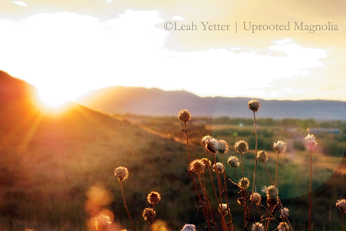 ©Leah Yetter Photographer
